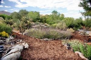 California Native Landscaping