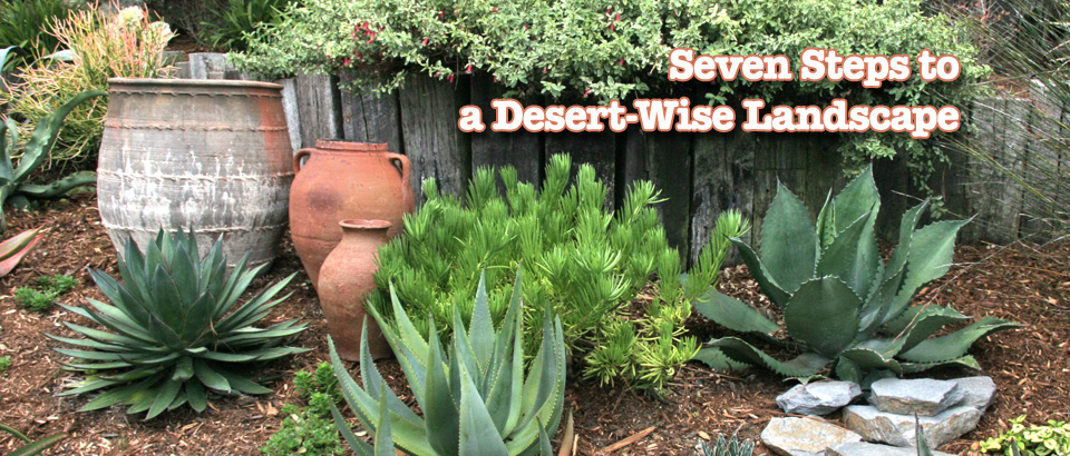 7 Steps to a Desert-Wise Landscape
