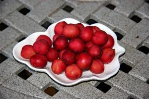 Holly Leaf Cherries