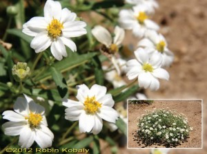 Plant of the Month for March 2012