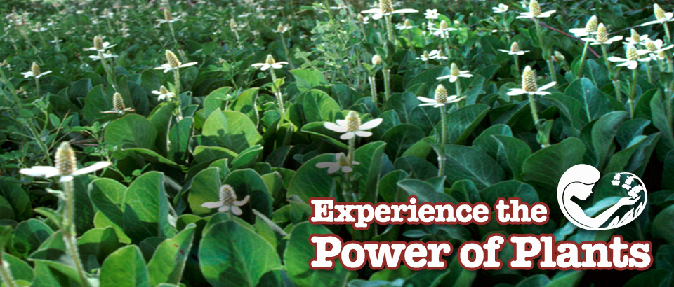 Experience the Power of Plants