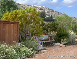 Discover the beauty and benefits of gardening with California's desert native plants!