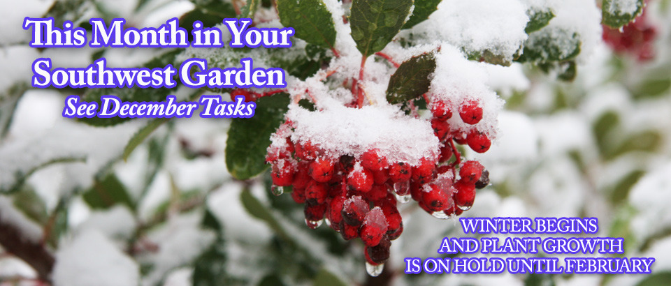 pop-feature-slider-Dec-in-Garden