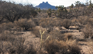 Like watching our friends struggle, it's hard to see desert plants go through long summers with no water.
