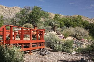 A bounty of southwest native plants are available to beautify your desert yard, using less water, less fertilizers, and bringing more wildlife into your yard.