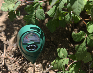 Moisture Meter-Basketbush Sumac-1062-web
